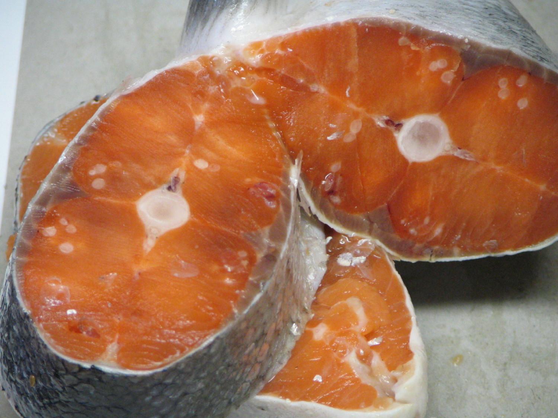 Henneguya slaminicola in salmon