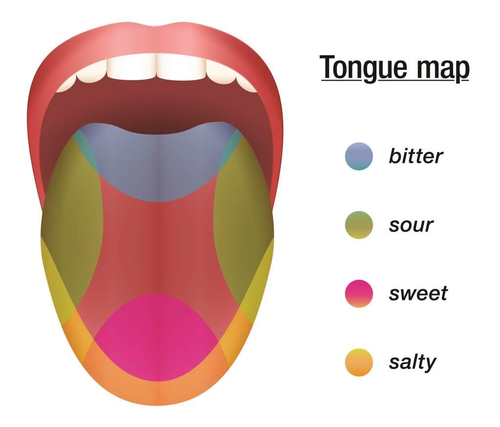 Taste Buds Map