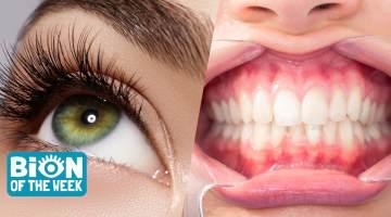 gum eyelashes