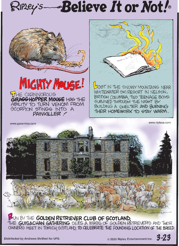 1. The carnivorous grasshopper mouse has the ability to turn venom from scorpion stings into a painkiller! 2. Lost in the snowy mountains near Whitewater Ski Resort in Nelson, British Columbia, two teenage boys survived through the night by building a shelter and burning their homework to stay warm. 3. Run by the Golden Retriever Club of Scotland, the Guisachan Gathering sees a mass of golden retrievers and their owners meet in Tomich, Scotland, to celebrate the founding location of the breed.