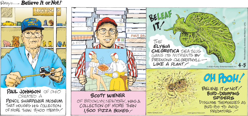 1. Paul Johnson of Ohio created a Pencil Sharpener Museum that houses his collection of more than 3,400 items! 2. Scott Wiener of Brooklyn, New York, has a collection of more than 1,500 pizza boxes! 3. The elysia chlorotica sea slug gains its nutrients by producing chlorophyll - like a plant! 4. Believe It or Not! Bird-dropping spiders disguise themselves as bird poo to avoid predators!