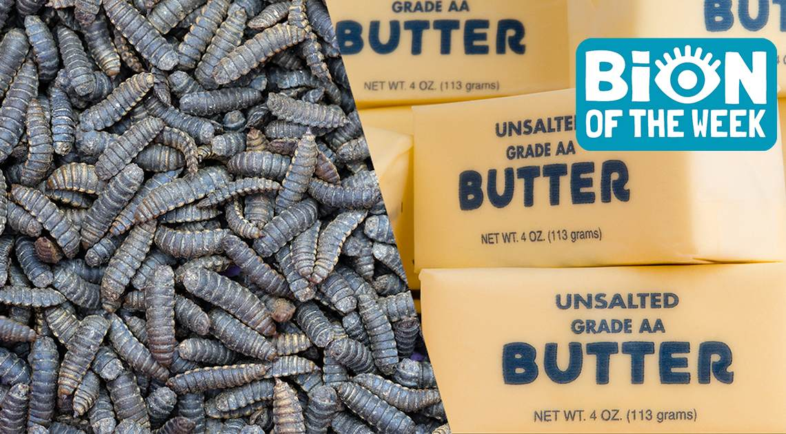 Scientists Develop Bug Butter