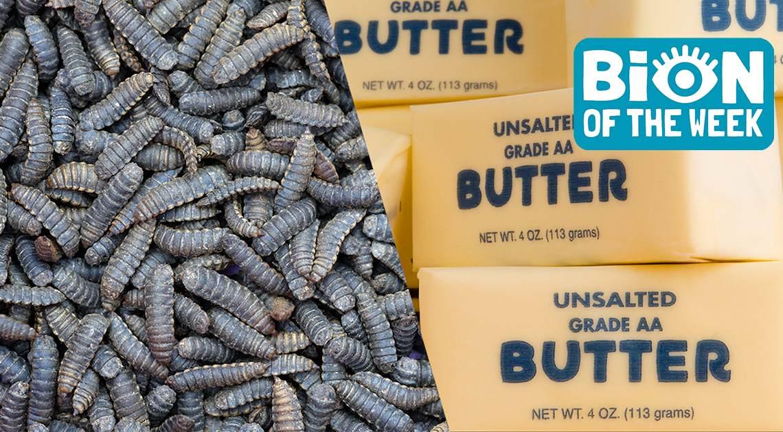 Scientists Develop Bug Butter