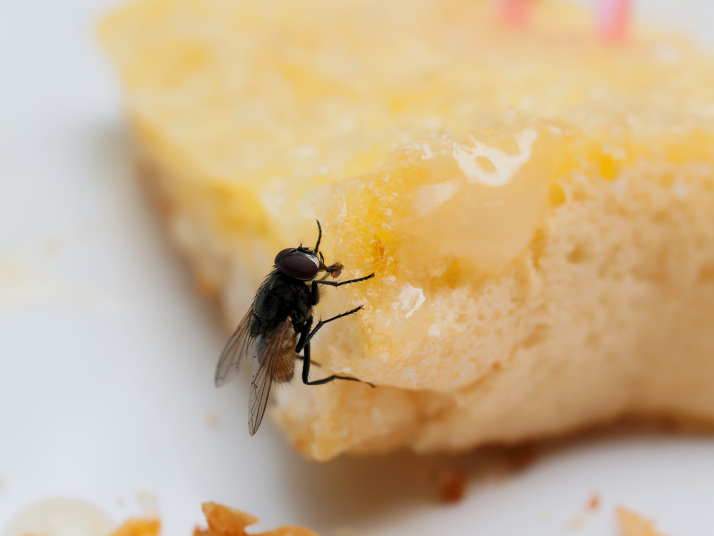 fly on buttered toast