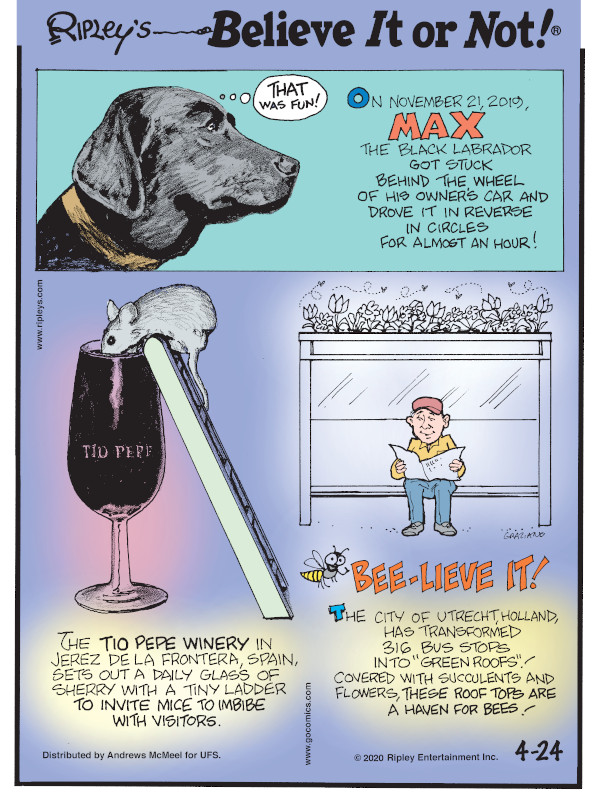 """1. On November 21, 2019, Max the Black Labrador got stuck behind the wheel of his owner's car and drove it in reverse in circles for almost an hour! 2. The Tio Pepe Winery in Jerez de la Frontera, Spain, sets out a daily glass of sherry with a tiny ladder to invite mice to imbibe with visitors. 3. The city of Utrecht, Holland, has transformed 316 bus stops into """"green roofs""""! Covered with succulents and flowers, these roof tops are a haven for bees!"""