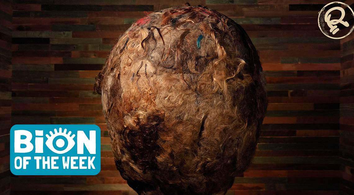 BION of the week