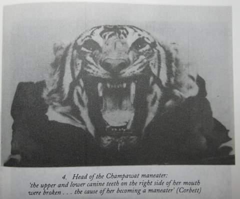 Champawat Man Eater