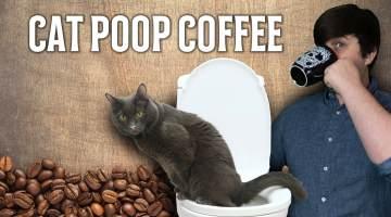 civet cat poop coffee