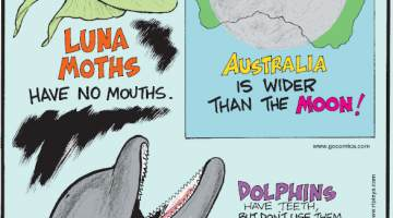 1. Luna moths have no mouths. 2. Australia is wider than the moon! 3. Dolphins have teeth but don't use them to chew food!
