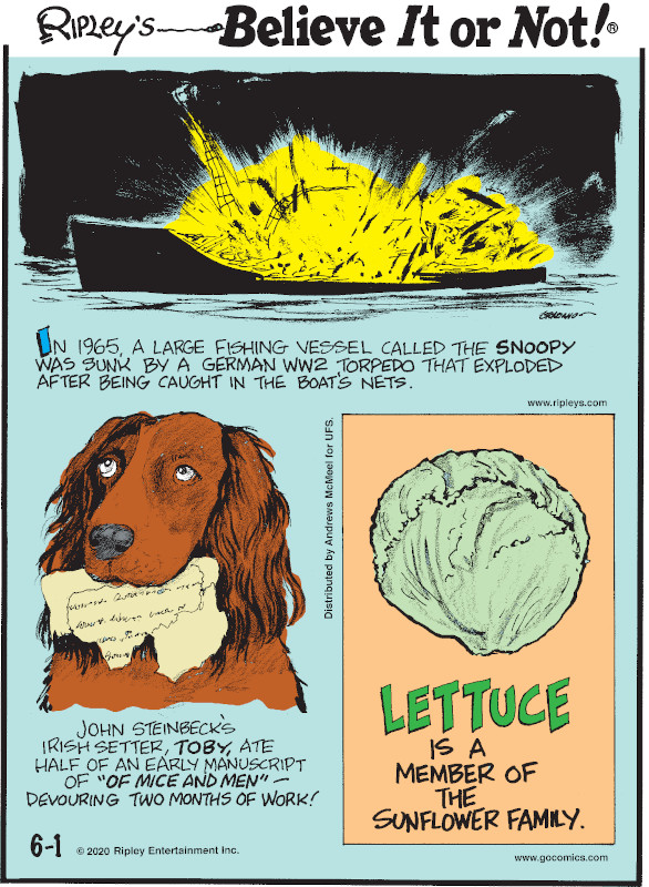 "1. In 1965, a large fishing vessel called the Snoopy was sunk by a German WW2 torpedo that exploded after being caught in the boat's nets. 2. John Steinbeck's Irish setter, Toby, ate half of an early manuscript of ""Of Mice and Men"" - devouring two months of work! 3. Lettuce is a member of the sunflower family."
