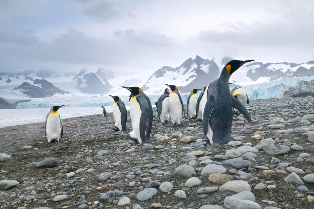 Scientists have reported getting so high on the nitrous oxide emitted by penguin excrement in Antarctica that it actually has made them sick.