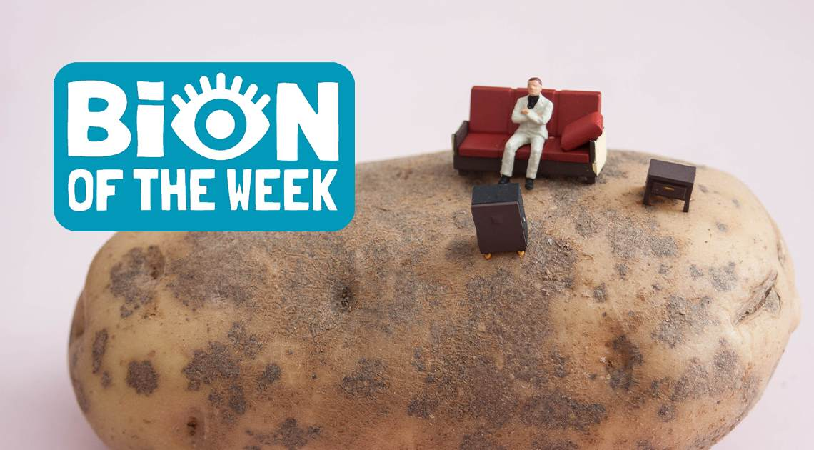 Paraglide Couch BION of the Week