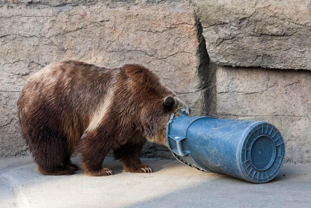 bear garbage