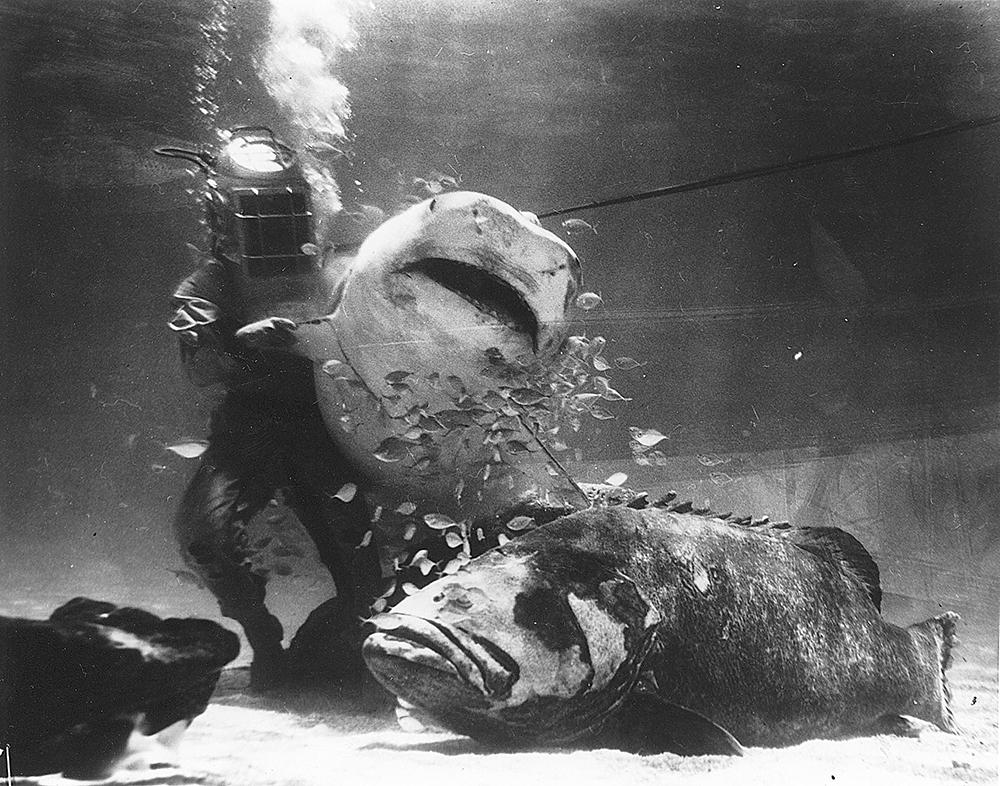 Ripley's Marineland Dive