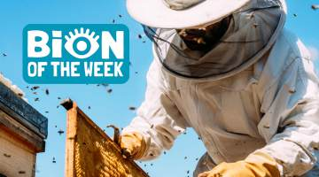 BION of the Week Bees