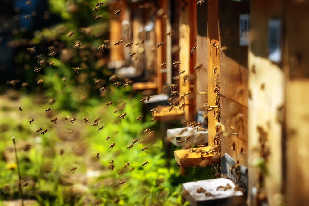 apiary with bees