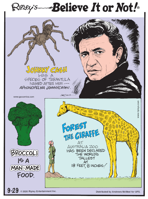 1. Johnny Cash has a species of tarantula named after him - Aphonopelma johnnycashi. 2. Broccoli is a man-made food. 3. Forest the giraffe at Australia Zoo has been declared the world's tallest at 18 feet, 8 inches!