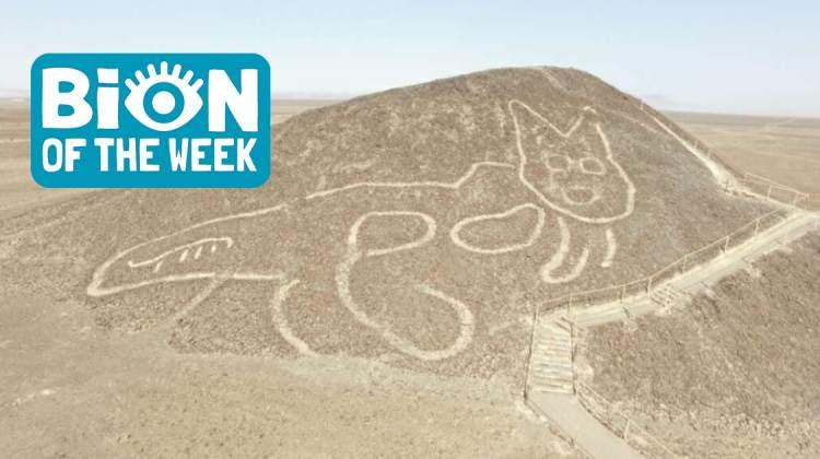 Peru Nazca Cat Lines