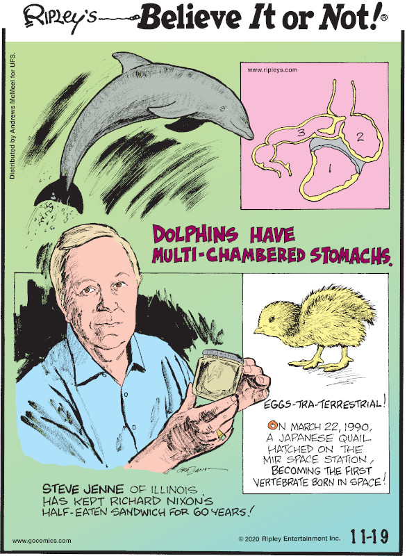1. Dolphins have multi-chambered stomachs. 2. Steve Jenne of Illinois has kept Richard Nixon's half-eaten sandwich for 60 years! 3. Eggs-Tra-Terrestrial! On March 22, 1990, a Japanese quail hatched on the Mir space station, becoming the first vertebrate born in space!