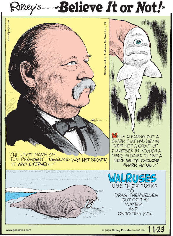 1. The first name of U.S. President Cleveland was not Grover, it was Stephen! 2. While cleaning out a shark that had died in their net, a group of fishermen in Indonesia were shocked to find a pure white cyclops shark fetus! 3. Walruses use their tusks to drag themselves out of the water and onto the ice.