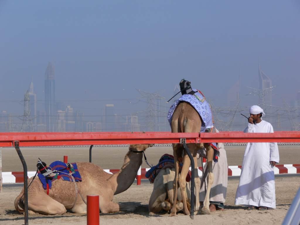Camels Robotic Jockeys