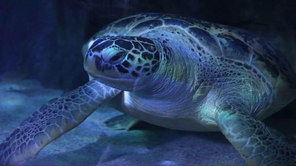 Gabby The Sea Turtle