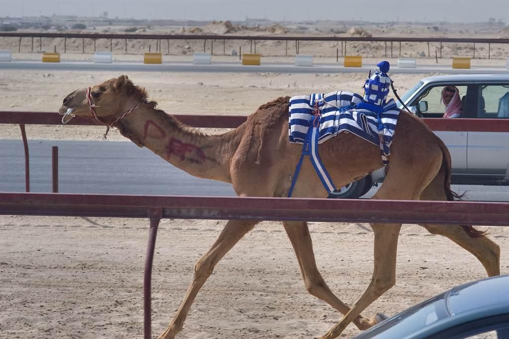 Camel with Robot Jockey