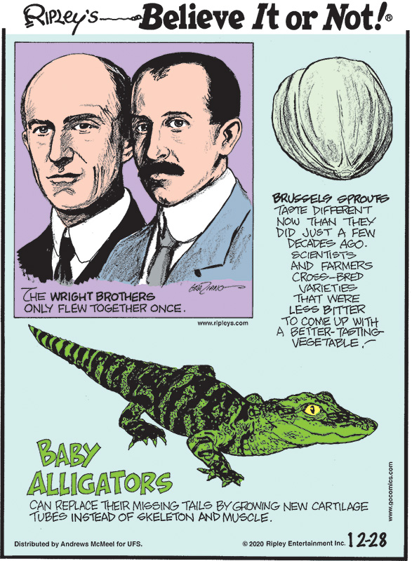 1. The Wright Brothers only flew together once. 2. Brussels sprouts taste different now than they did just a few decades ago. Scientists and farmers cross-bred varieties that were less bitter to come up with a better-tasting vegetable! 3. Baby alligators can replace their missing tails by growing new cartilage tubes instead of skeleton and muscle.