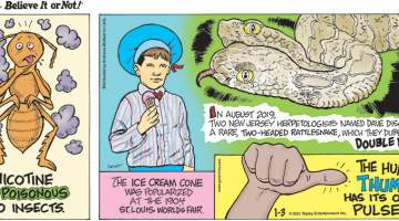 1. Nicotine is poisonous to insects. 2. The ice cream cone was popularized at the 1904 St. Louis World's Fair. 3. In August 2019, two New Jersey herpetologists names Dave discovered a rare, two-headed rattlesnake, which they dubbed Double Dave! 4. The human thumb has its own pulse.