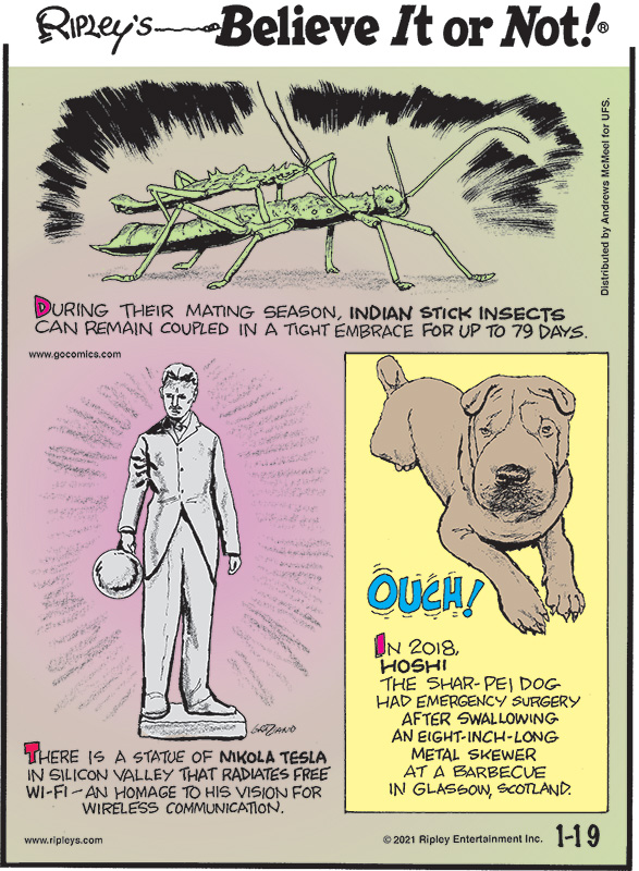 1. During their mating season, Indian stick insects can remain coupled in a tight embrace for up to 79 days. 2. There is a statue of Nikola Tesla in Silicon Valley that radiates free Wi-Fi an homage to his vision for wireless communication. 3. Ouch! In 2018, Hoshi the Shar-Pei dog had emergency surgery after swallowing an eight-inch-long metal skewer at a barbecue in Glasgow, Scotland.