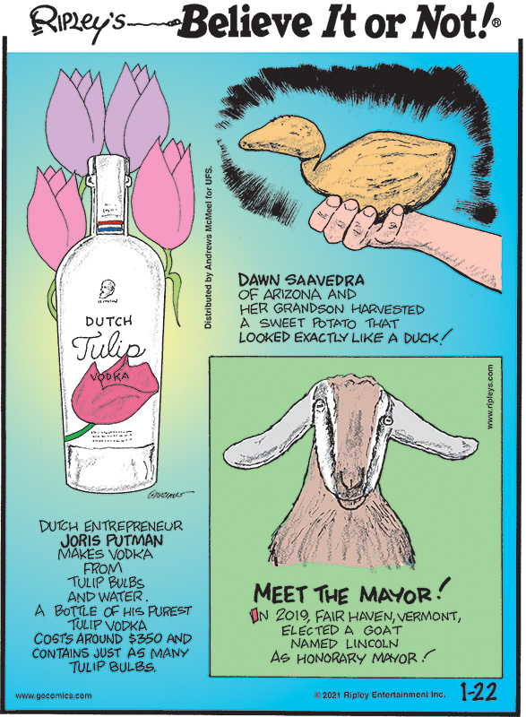 1. Dawn Saavedra of Arizona and her grandson harvested a sweet potato that looked exactly like a duck! 2. Dutch entrepreneur Joris Putman makes vodka from tulip bulbs and water. A bottle of his purest tulip vodka costs around $350 and contains just as many tulip bulbs. 3. Meet The Mayor! In 2019, Fair Haven, Vermont, elected a goat named Lincoln as honorary mayor!