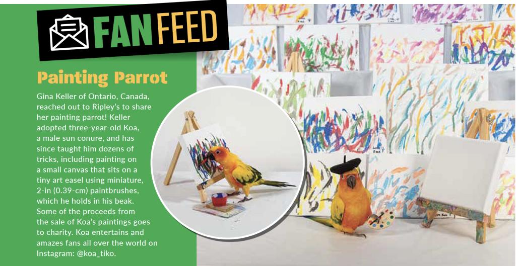 Koa the Painting Parrot