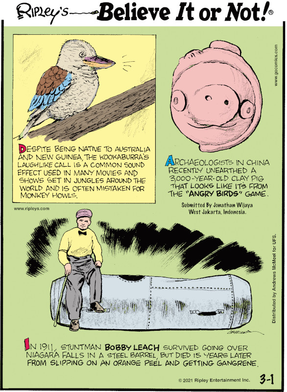 """1. Despite being native to Australia and New Guinea, the kookaburra's laughlike call is a common sound effect used in many movies and shows set in jungles around the world and is often mistaken for monkey howls. 2. Archaeologists in China recently unearthed a 3,000-year-old clay pig that looks like its from the """"Angry Birds"""" game. Submitted by Jonathan Wijaya West Jakarta, Indonesia 3. In 1911, stuntman Bobby Leach survived going over Niagara Falls in a steel barrel, but died 15 years later from slipping on an orange peel and getting gangrene."""