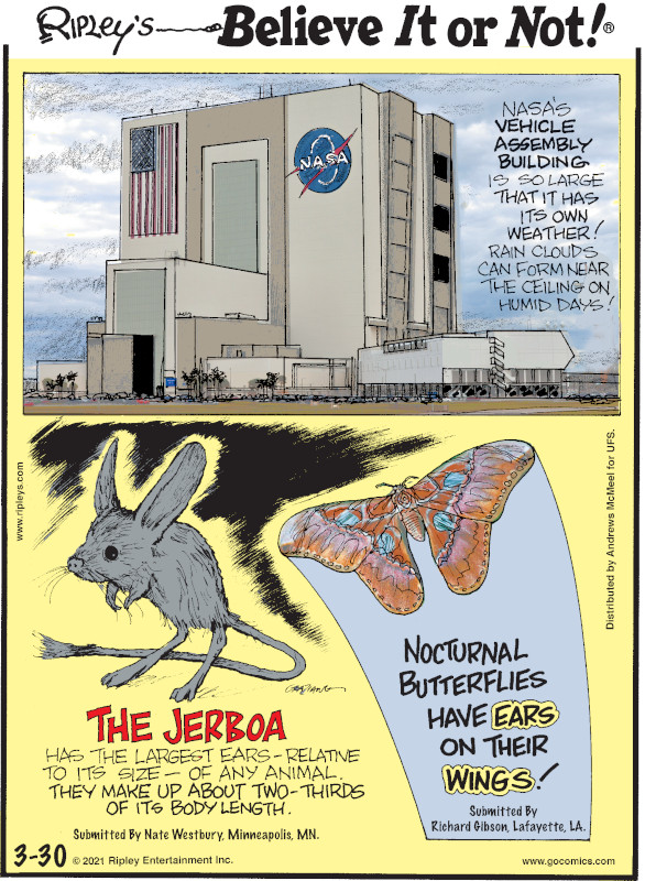 1. NASA's Vehicle Assembly Building is so large that it has its own weather! Rain clouds can form near the ceiling on humid days! 2. The jerboa has the largest ears - relative to its size - of any animal. They make up about two-thirds of its body length. Submitted by Nate Westbury, Minneapolis, MN. 3. Nocturnal butterflies have ears on their wings! Submitted by Richard Gibson, Lafayette, LA.