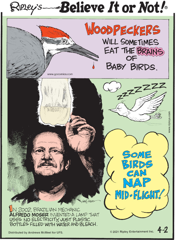 1. Woodpeckers will sometimes eat the brains of baby birds. 2. In 2002, Brazil van mechanic Alfredo Moser invented a lamp that uses no electricity, just plastic bottles filled with water and bleach. 3. Some birds can nap mid-flight!