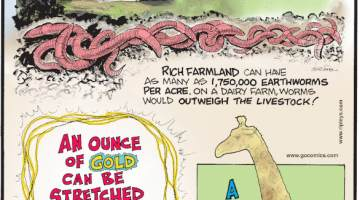 1. Rich Farmland can have as many as 1,750,000 earthworms per acre. On a dairy farm, worms would outweigh the livestock! 2. An ounce of gold can be stretched into a wire measuring 50 miles! 3. A giraffe heart can measure more than two feet long!