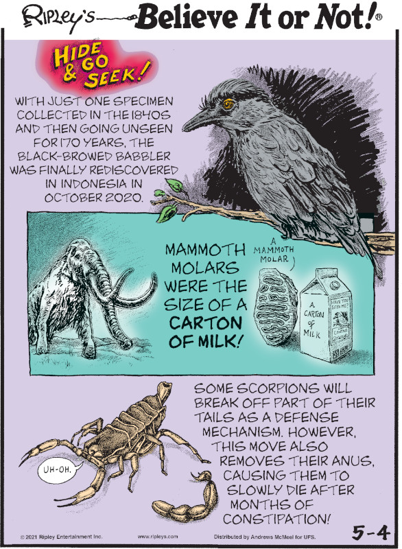 1. Hide & Go Seek! With just one specimen collected in the 1840s and then going unseen for 170 years, the black-browed babbler was finally rediscovered in Indonesia in October 2020. 2. Mammoth molars were the size of a carton of milk! 3. Some scorpions will break off part of their tails as a defense mechanism. However, this move also removes their anus, causing them to slowly die after months of constipation!