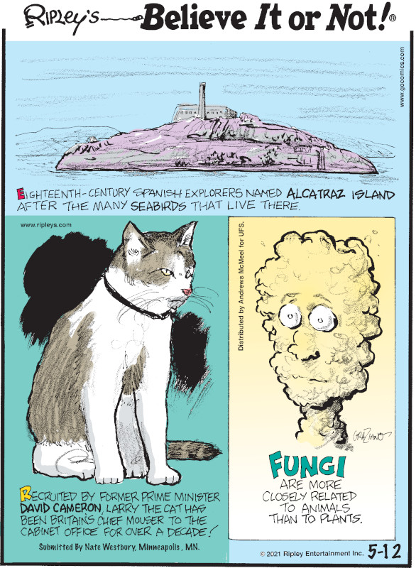 1. Eighteenth-century Spanish explorers named Alcatraz Island after the many seabirds that live there. 2. Recruited by former Prime Minister David Cameron, Larry the cat has been Britain's chief mouser to the cabinet office for over a decade! Submitted by Nate Westbury, Minneapolis, MN. 3. Fungi are more closely related to animals than to plants.