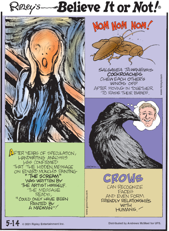 """1. After years of speculation, handwriting analysis has confirmed that the hidden message on Edvard Munch's painting """"The Scream"""" was written by the artist himself. The message reads, """"Could only have been painted by a madman""""! 2. Nom Nom Nom! Salganea taiwanensis cockroaches chew each other's wings off after moving in together to raise their babies. 3. Crows can recognize faces and even form friendly relationships with humans!"""