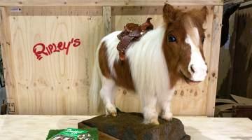 Smidget Tiny Horse