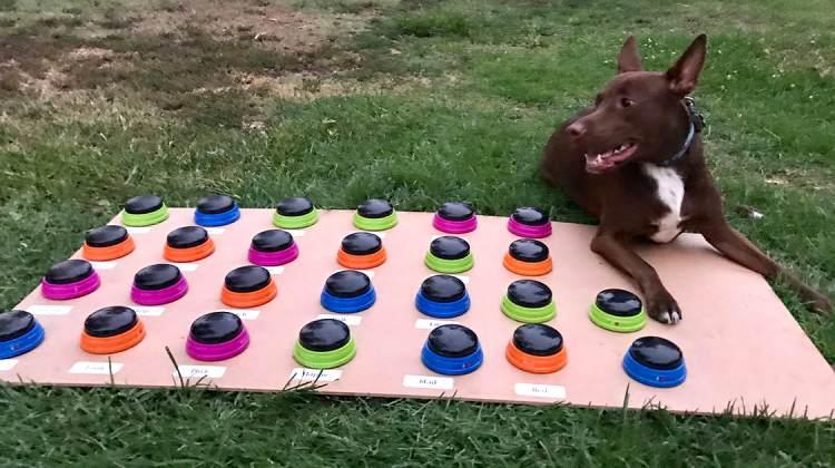 Stella and Button Board