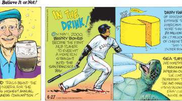 1. Ireland trails behind the U.K. and Nigeria for the world's highest annual Guinness consumption! 2. In The Drink! On May 1, 2000, Barry Bonds became the first MLB player to ever hit a home run straight into the San Francisco Bay. 3. Dairy farmers of Wisconsin estimate that Americans ate more than 20 million pounds, or 1.7 million wheels, of cheese during this year's Super Bowl Sunday! 4. Sea turtles are sometimes fed mayonnaise after an oil spill! The condiment's properties thin out tar and make it less sticky, allowing for easy cleanup inside and out.