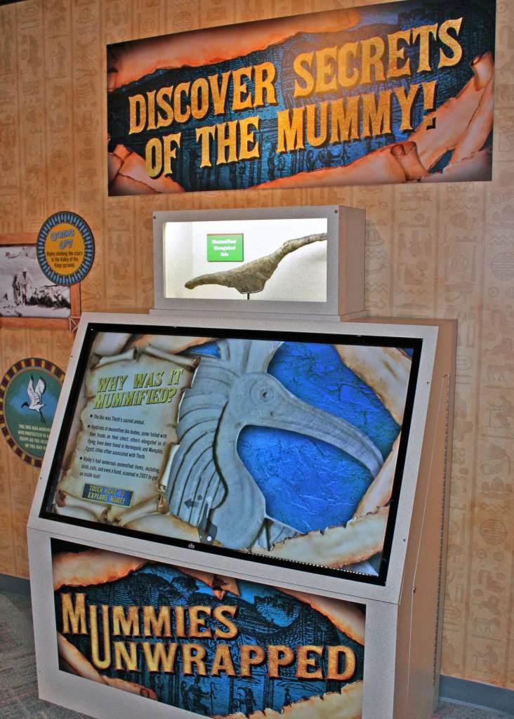 Interspectral Interactive Mummy Ibis Display