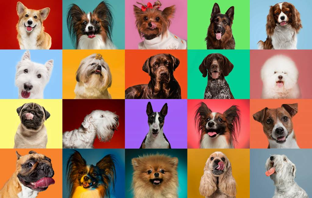 Many Different Dog Breeds