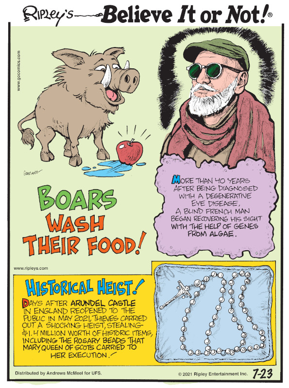 1. Boars wash their food! 2. More than 40 years after being diagnosed with a degenerative eye disease, a blind French man began recovering his sight with the help of genes from algae. 3. Historical Heist! Days after Arundel Castle in England reopened to the public in May 2021, thieves carried out a shocking heist, stealing $1.4 million worth of historic items, including the rosary beads that Mary, Queen of Scots carried to her execution!