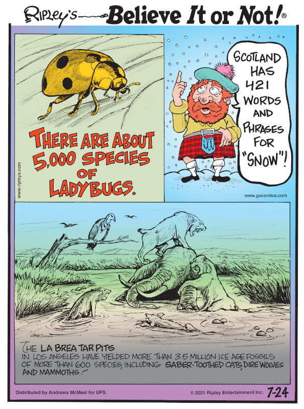 """1. There are about 5,000 species of ladybugs. 2. Scotland has 421 words and phrases for """"snow""""! 3. The La Brea Tar Pits in Los Angeles have yielded more than 3.5 million Ice Age fossils of more than 600 species, including saber-toothed cats, dire wolves and mammoths!"""