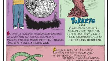 1. In 2003, a group of students and teachers at a Russian art school created a massive padlock measuring 4 feet, 8 inches tall and 3 feet, 5 inches wide. 2. Turkeys have periscopic vision, meaning that they can get a full 360° view of their surroundings just by turning their head. 3. Researchers at the U.K.'s Natural History Museum used a 185-year-old painting to properly classify a species of snake that had been misidentified for about 200 years! Submitted by Nate Westbury, Minneapolis, MN.