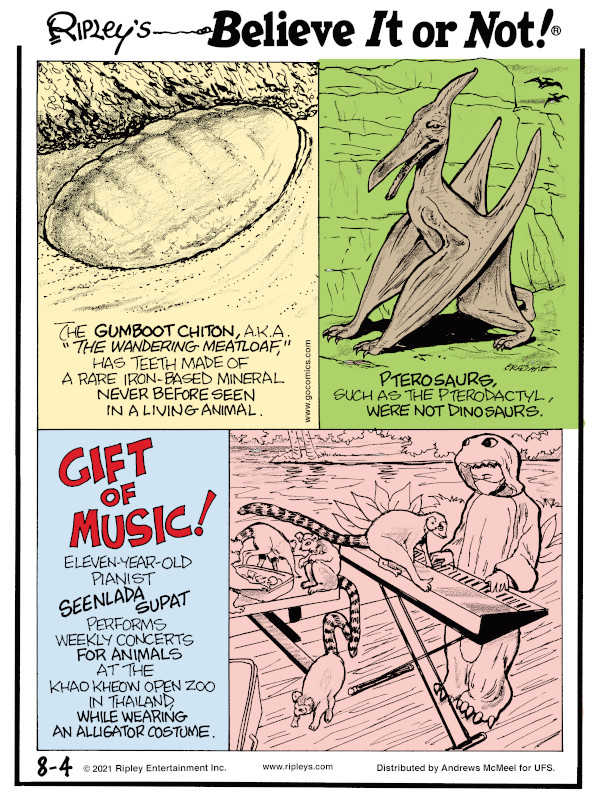 """1. The gumboot chiton, a.k.a. """"the wandering meatloaf,"""" has teeth made of a rare iron-based mineral never before seen in a living animal. 2. Pterosaurs, such as the pterodactyl, were not dinosaurs. 3. Gift of Music! Eleven-year-old pianist Seenlada Supat performs weekly concerts for animals at the Khao Kheow Open Zoo in Thailand, while wearing an alligator costume."""
