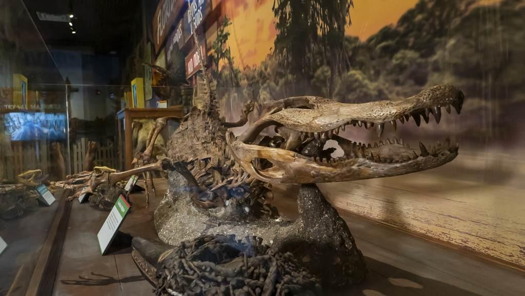 Gator Skeleton at Ripley's Orlando