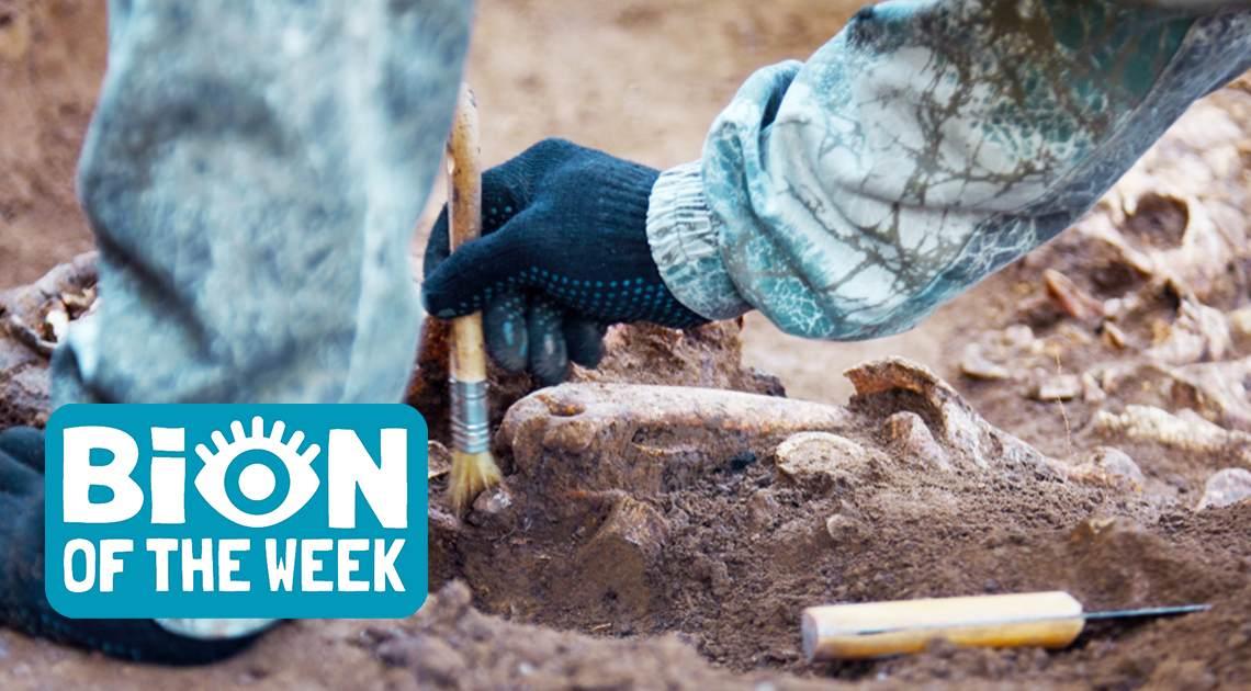 Skeleton Remains BION of the Week